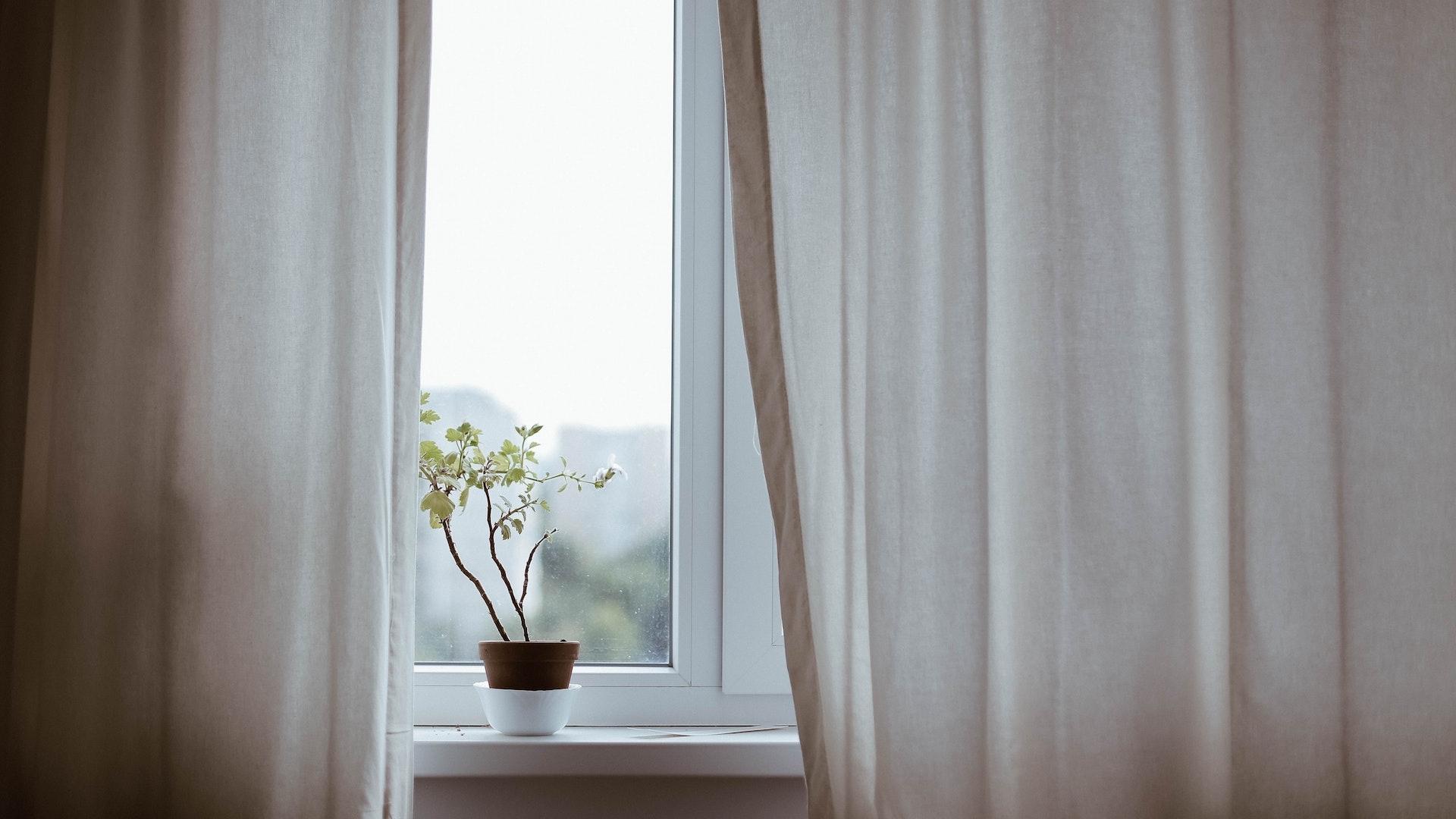 カーテンと窓と植木鉢の無料バーチャル背景素材