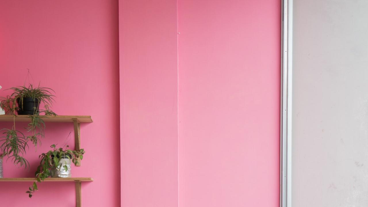 ピンクの壁と観葉植物の無料バーチャル背景素材