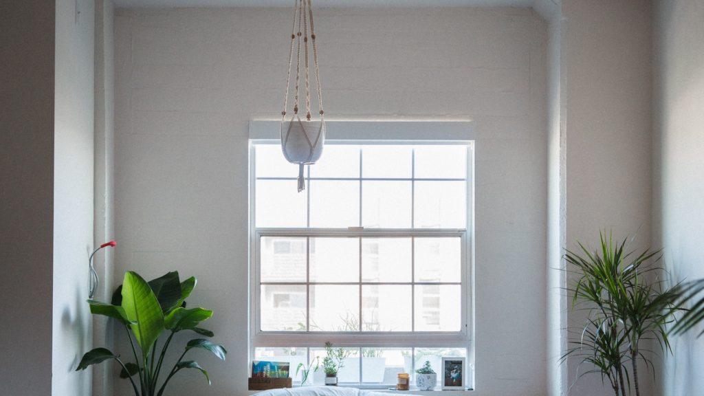 白い壁と窓と2つの観葉植物の無料バーチャル背景素材