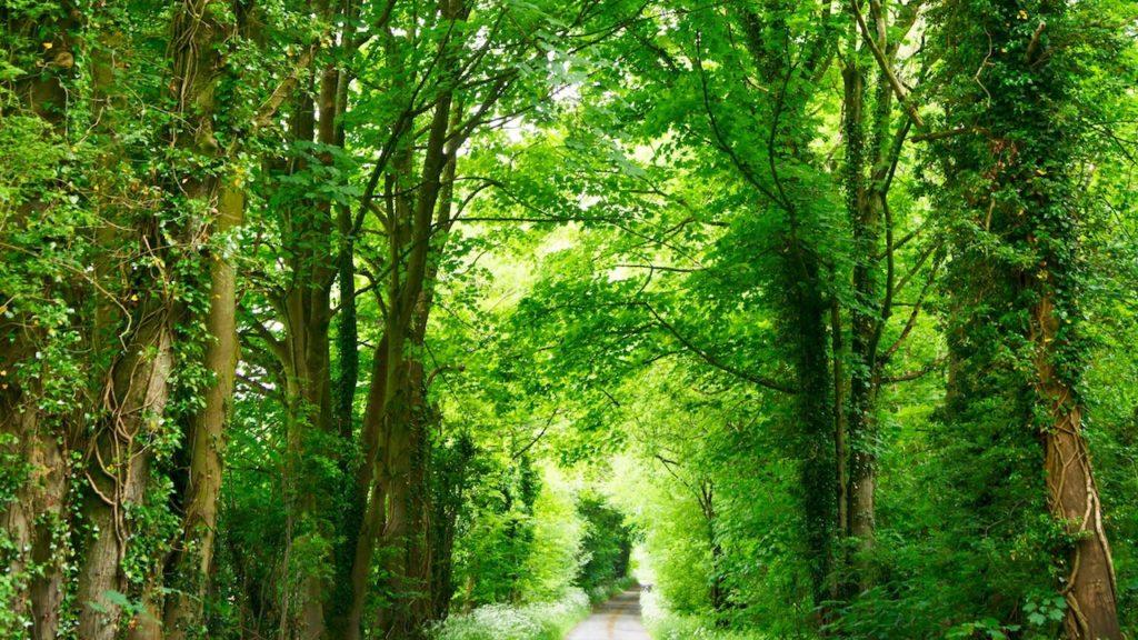 森の小道の無料バーチャル背景素材