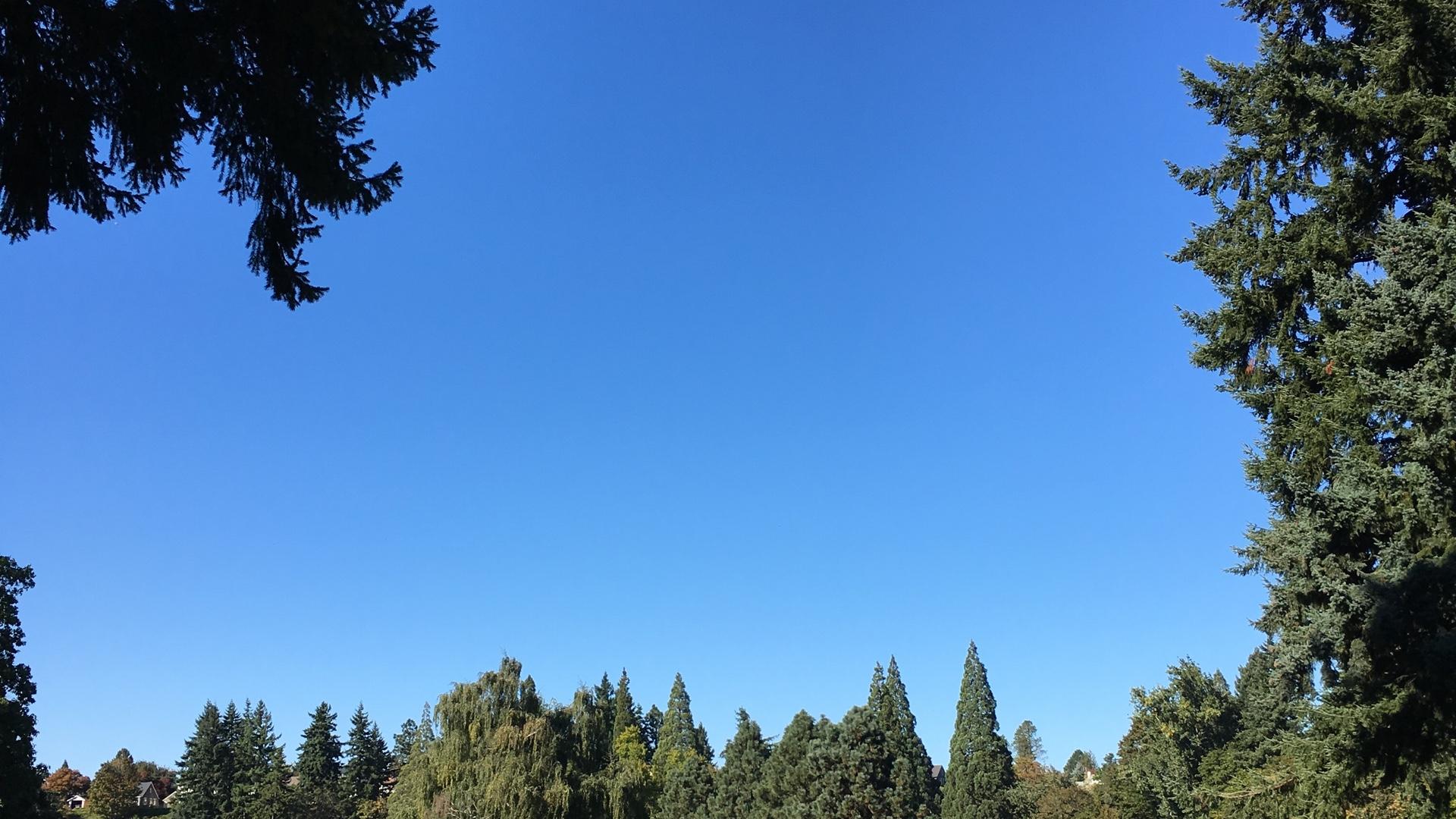 木の間からのぞく青い空