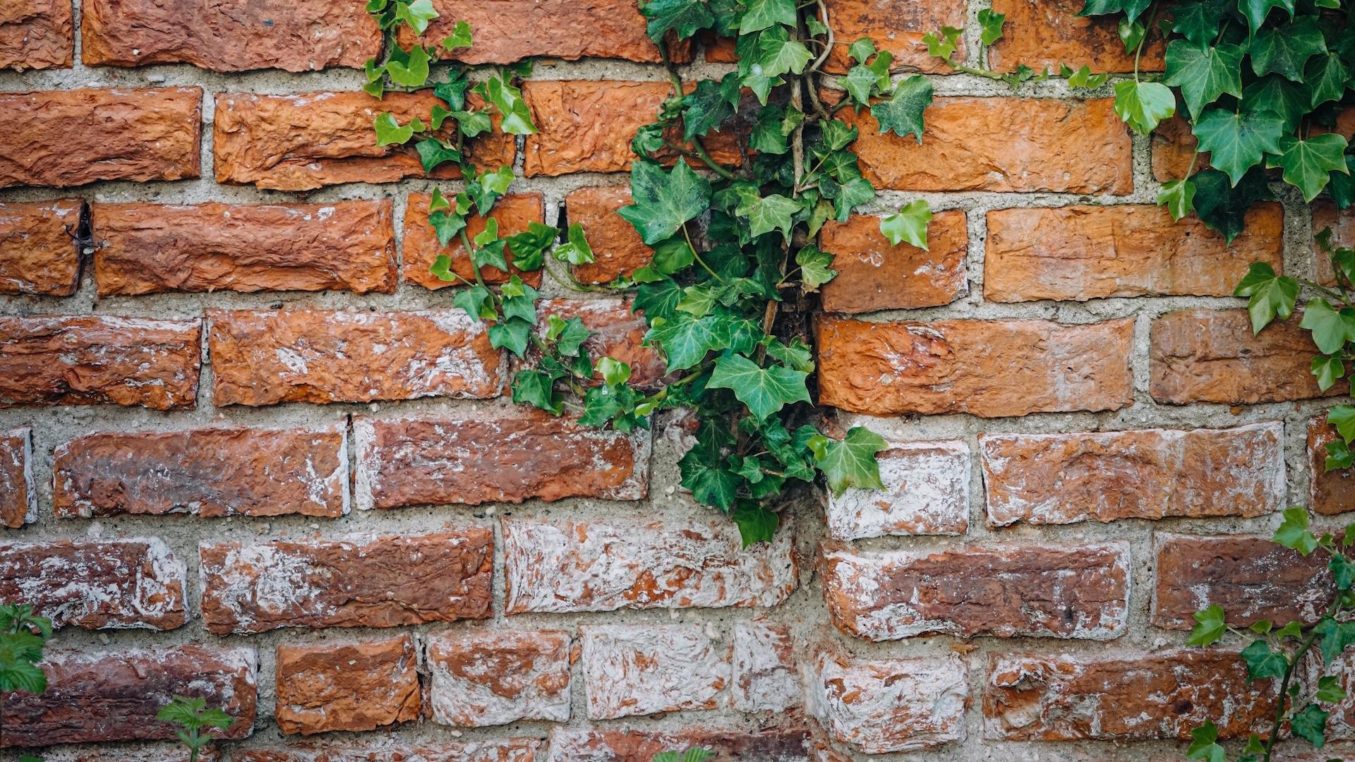 緑のアイビーとレンガの壁