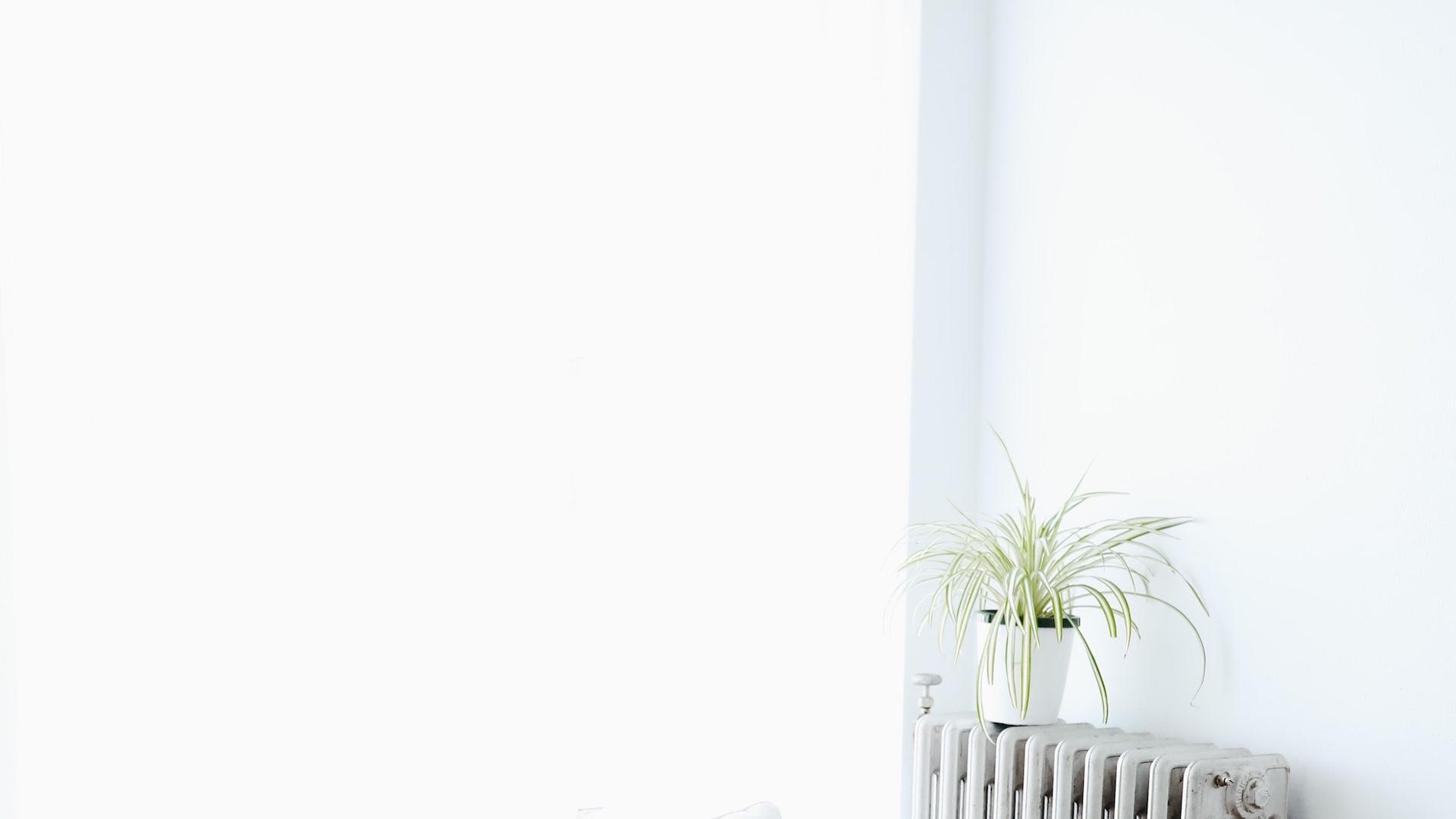 白い壁とオイルヒーターと観葉植物