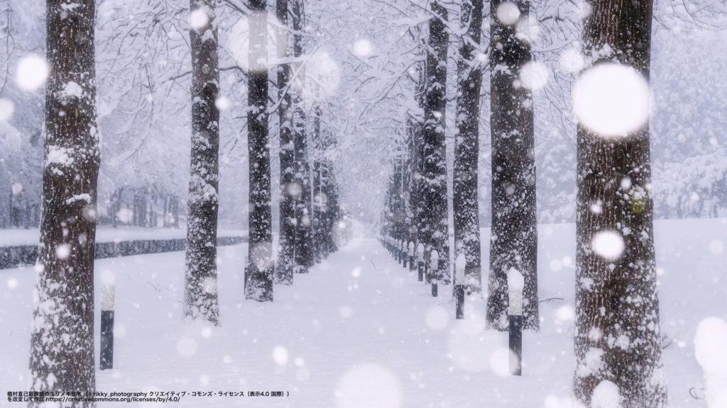 植村直己冒険館のユリノキ並木