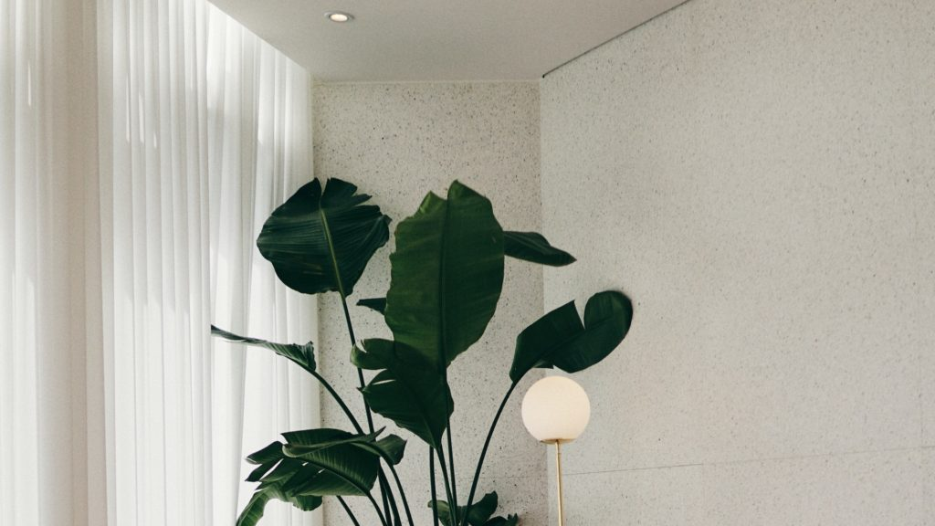 大きな観葉植物とライトと白いカーテン