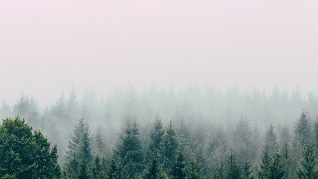 霧の立ち込める森