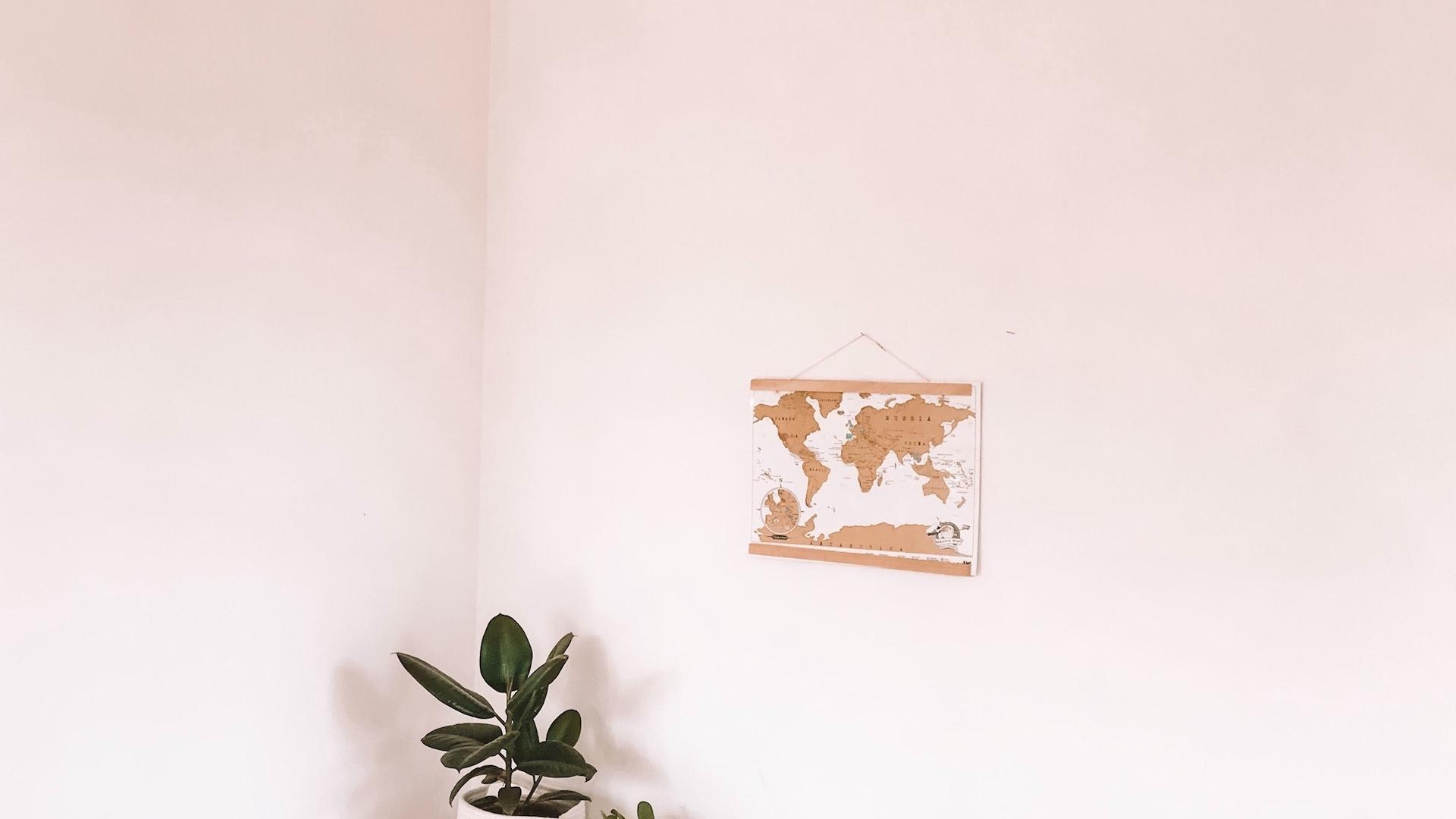 観葉植物と薄いピンクの壁