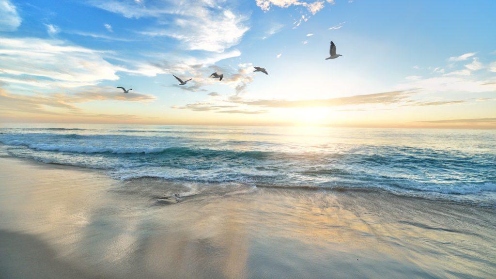 日の出の空を飛ぶ鳥