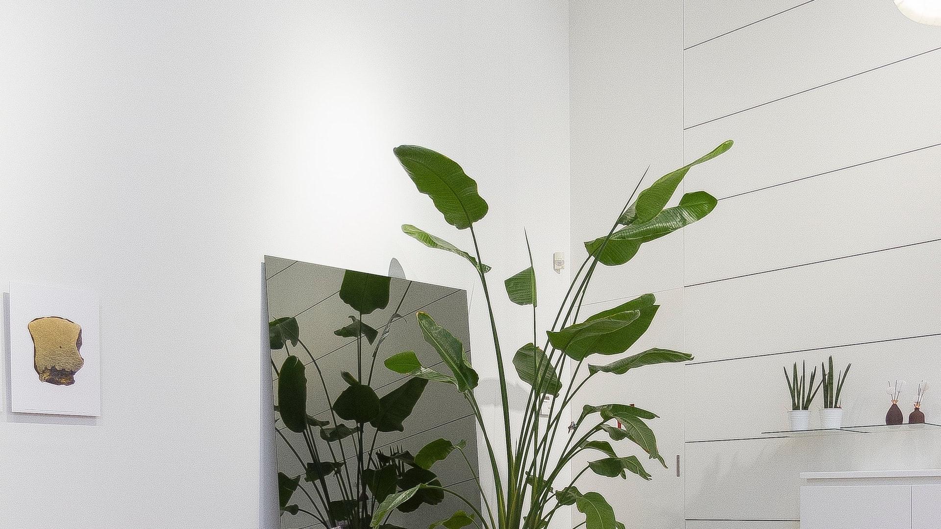 大きな観葉植物と鏡