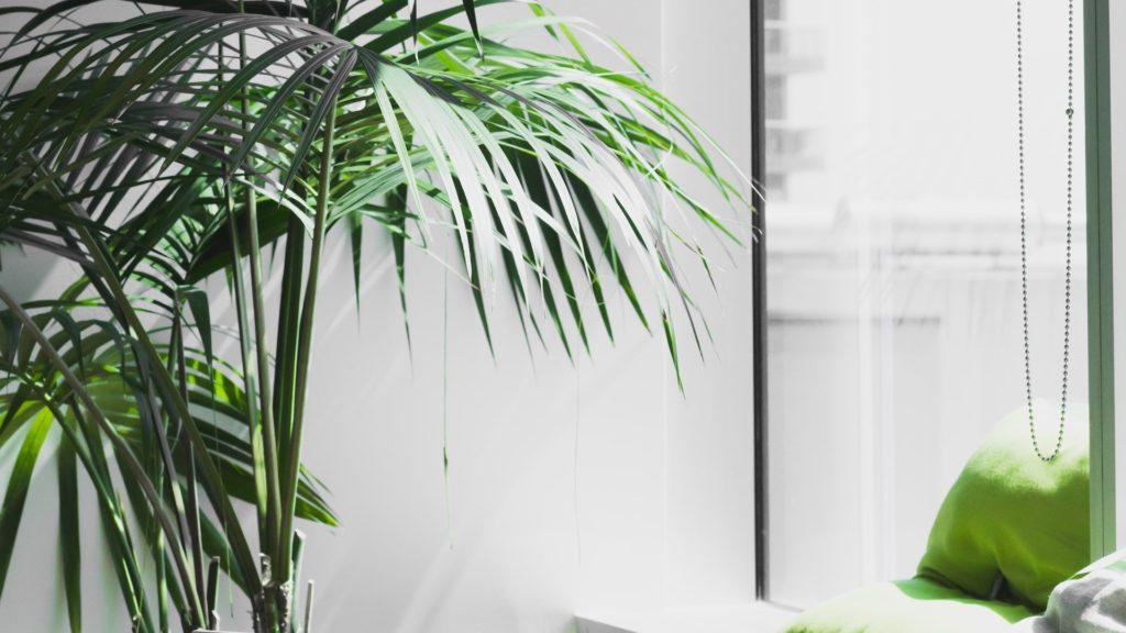 オフィスの窓と観葉植物