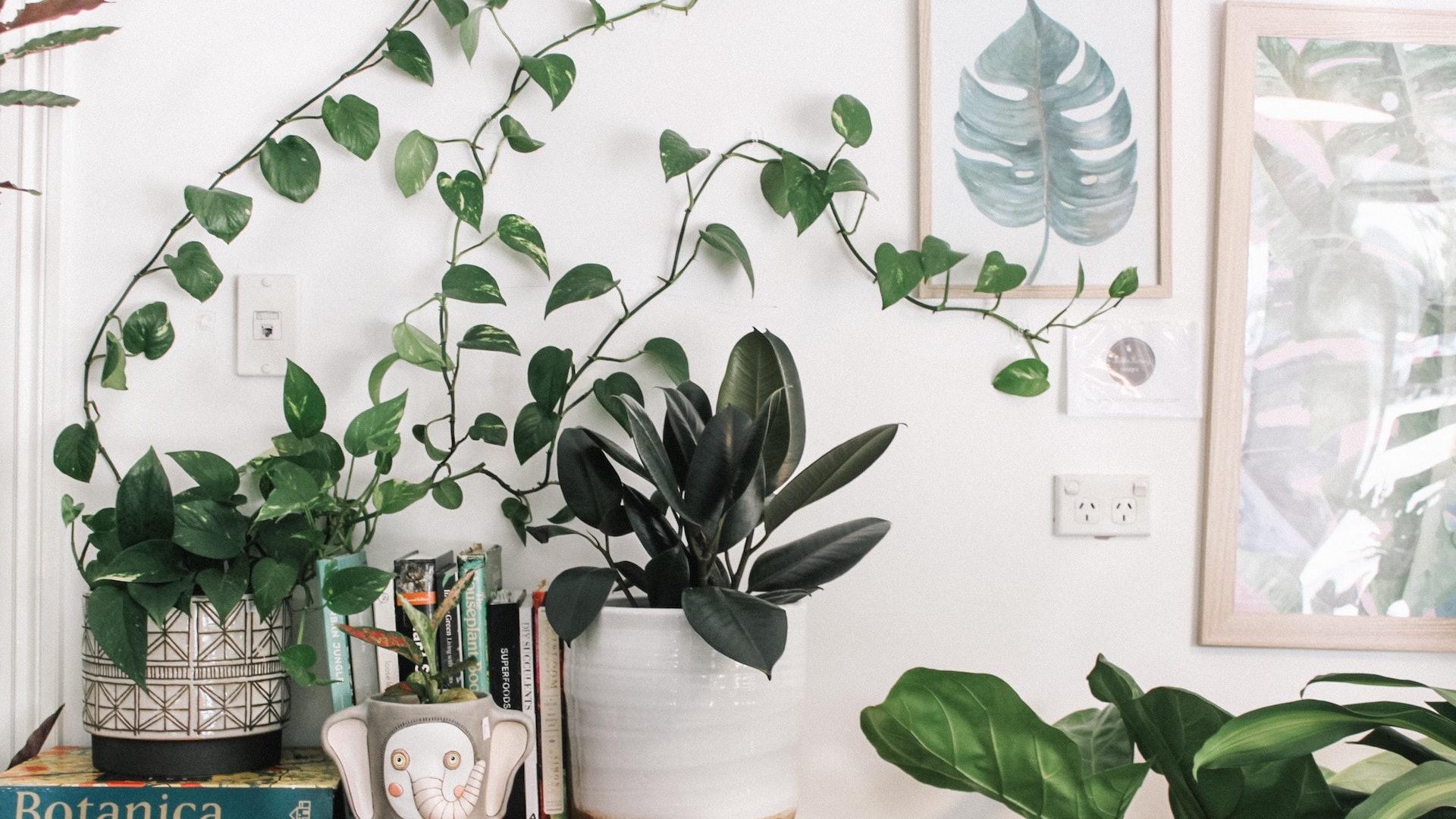 たくさんの観葉植物とアート