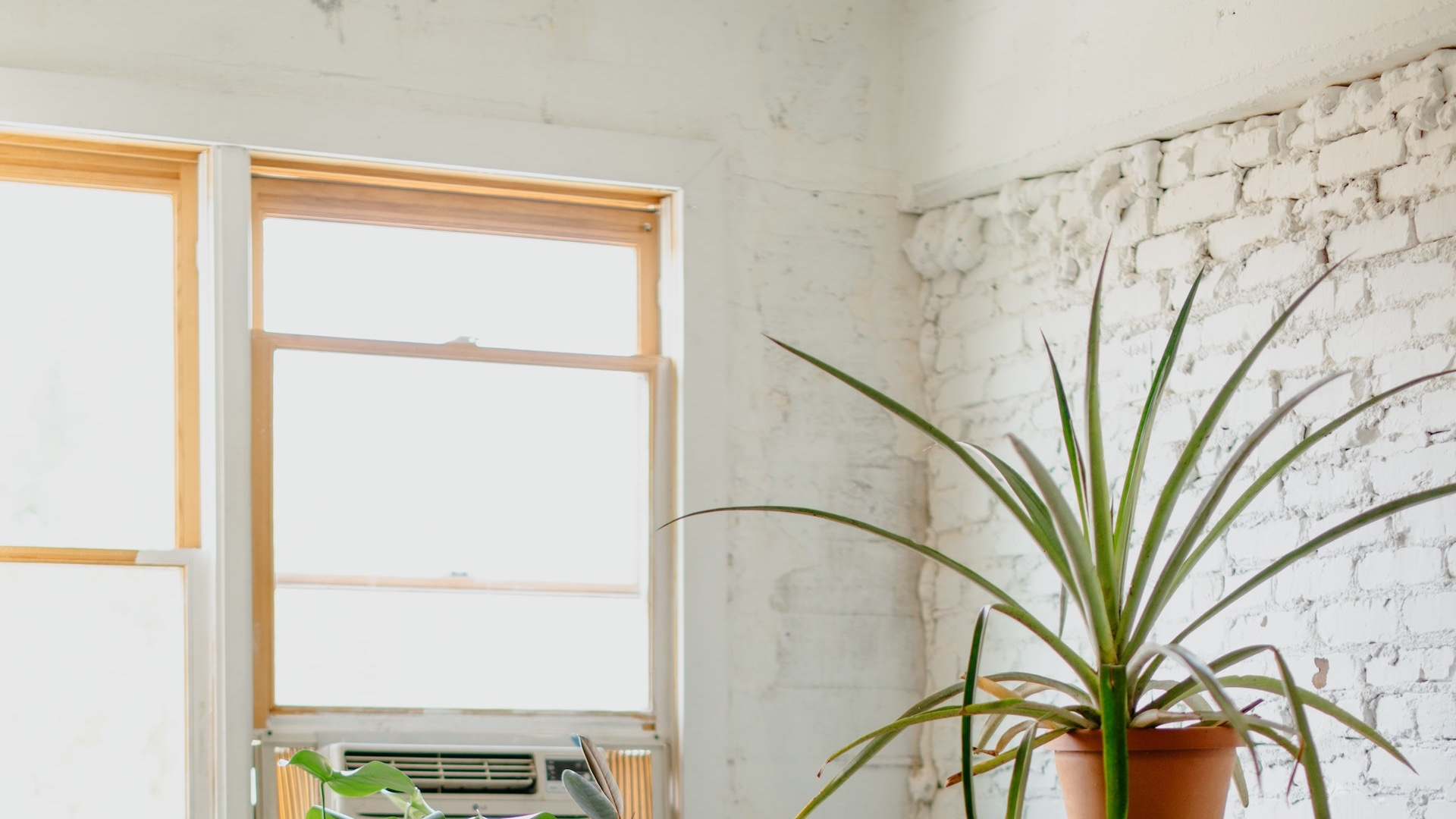白いレンガの壁と窓と観葉植物