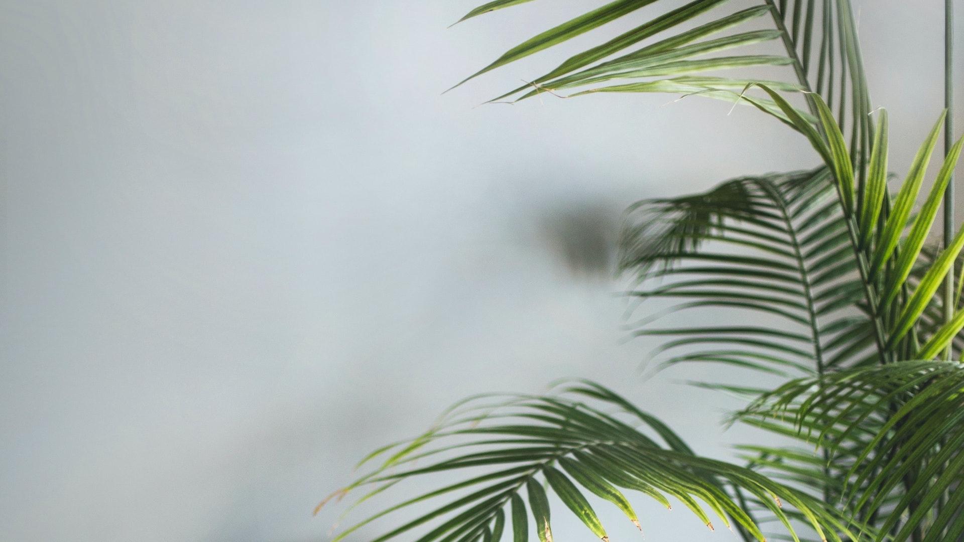 大きな観葉植物とグレーの壁