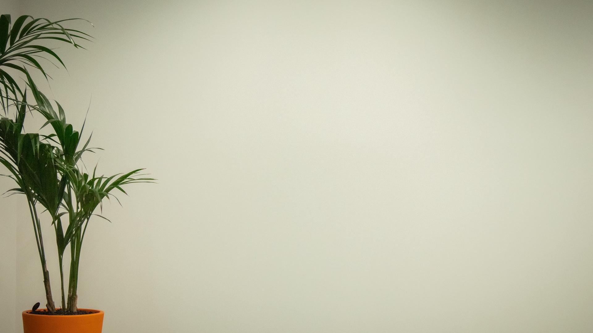 白い壁と観葉植物