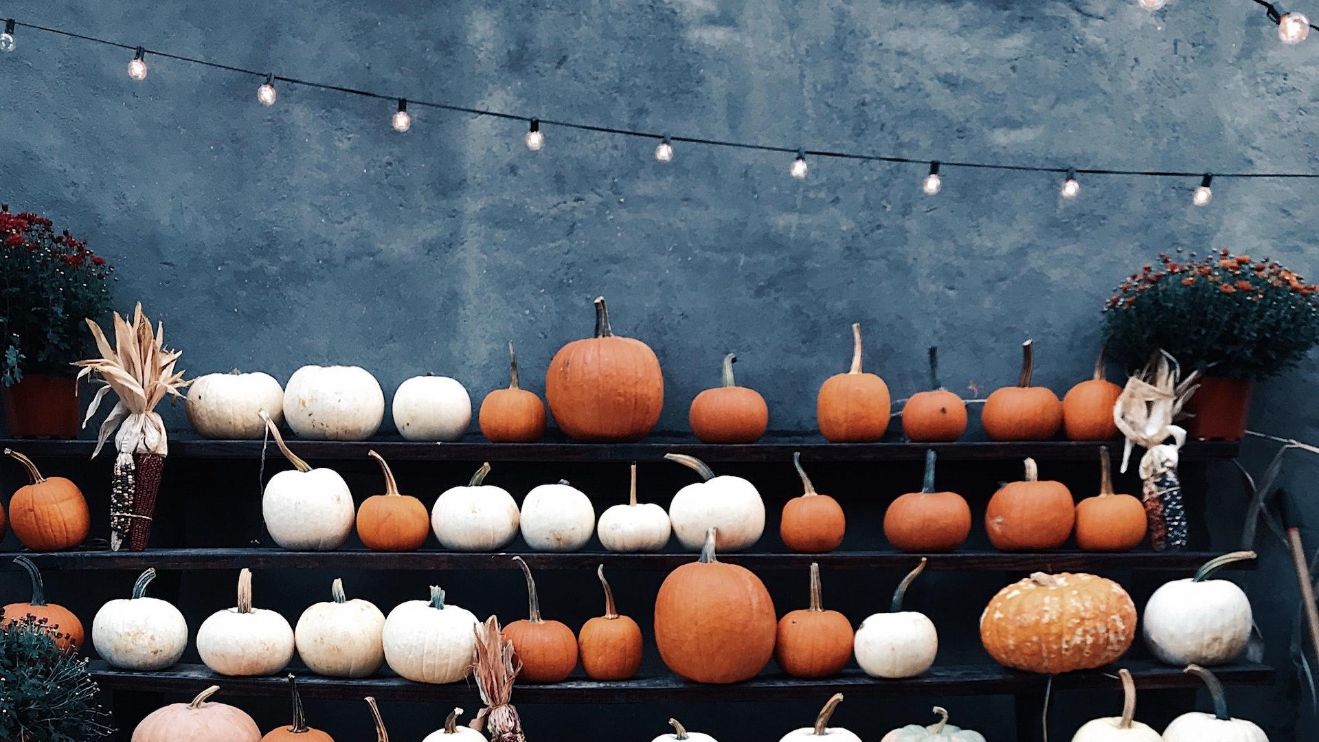 白とオレンジのたくさんのかぼちゃ