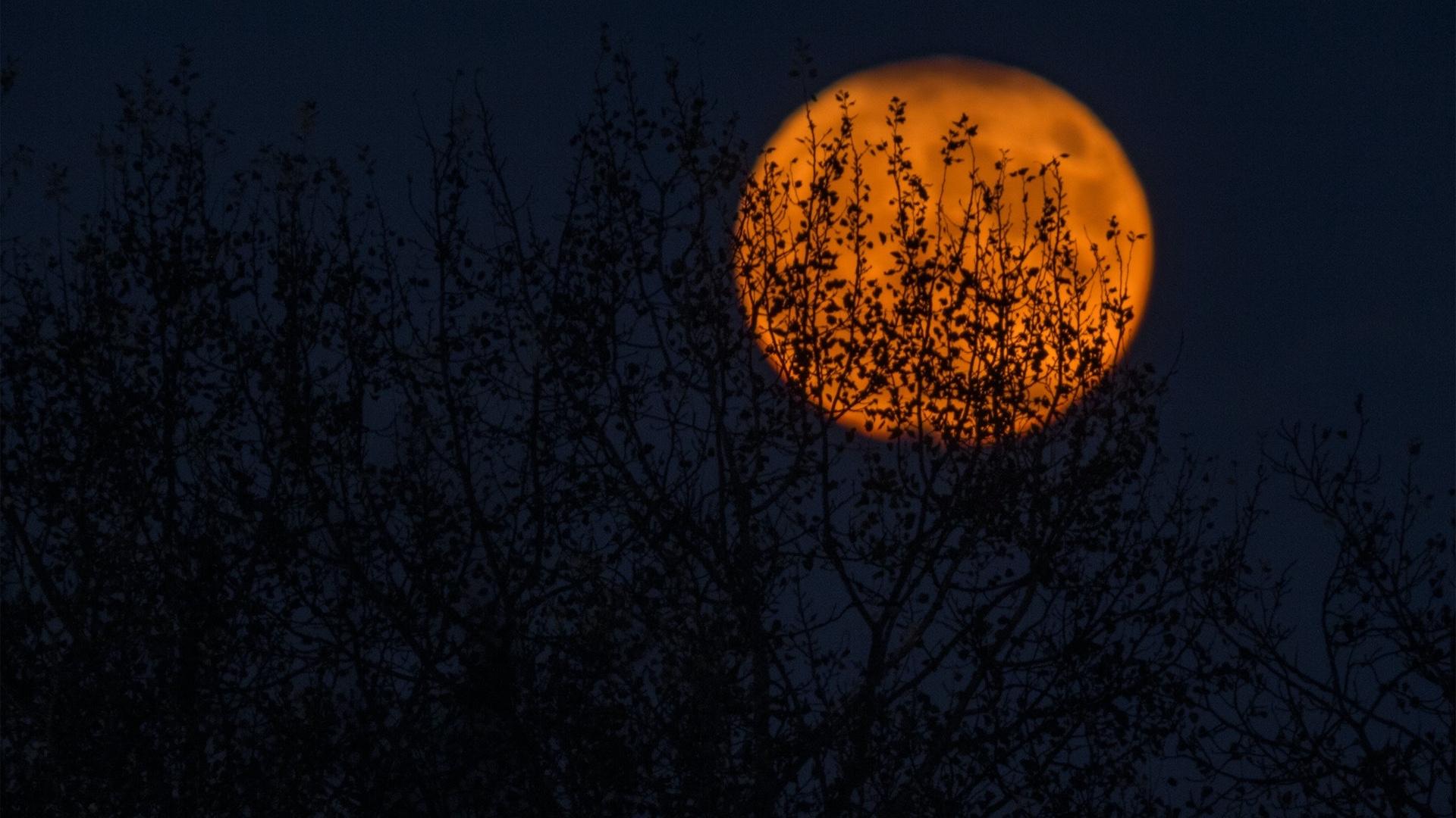 赤い月の夜