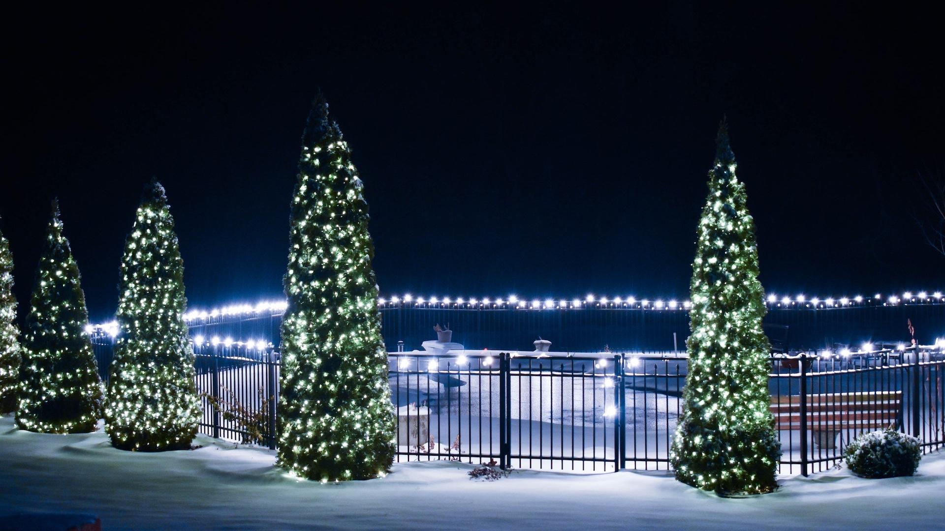 たくさんのクリスマスツリー