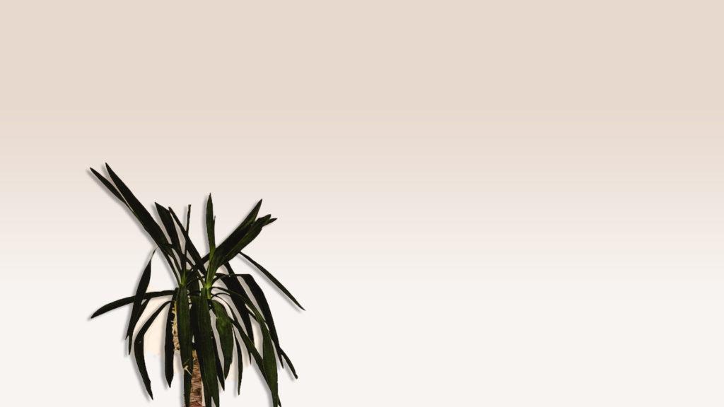 アイボリーの壁と観葉植物