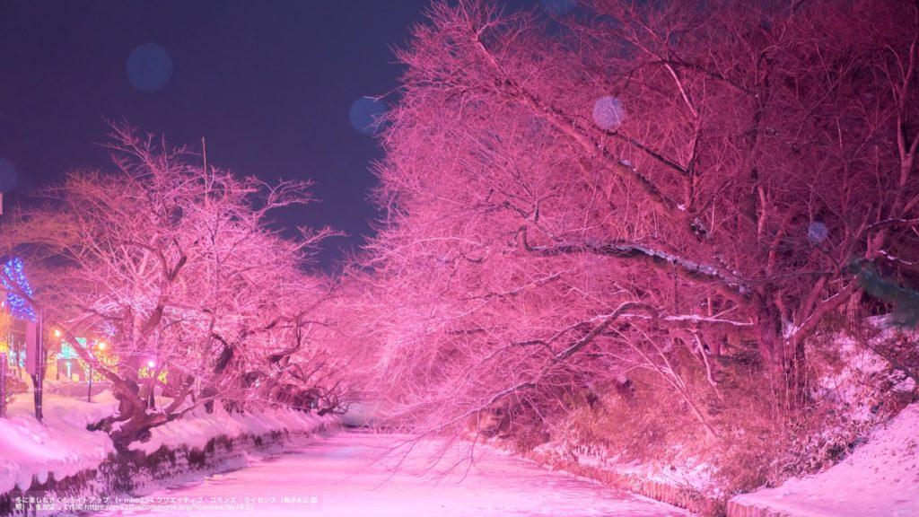 冬に楽しむさくらライトアップ(青森県)