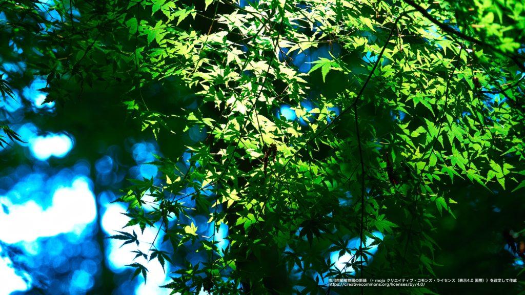 市川市動植物園の新緑(千葉県)